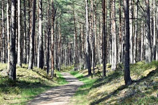 forest latvija latvia
