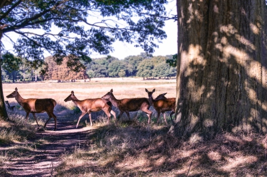richmond park london england